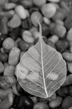 Leaf and stone Stock Photo