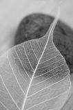 Leaf and stone Stock Photography