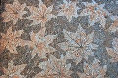 Leaf stone. Leaf pattern on paving stone royalty free stock photo