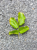 Leaf on stone Royalty Free Stock Photography