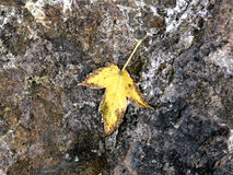 Leaf on the stone Royalty Free Stock Photos