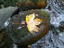 A leaf on a stone in the bens river in France royalty free stock photo