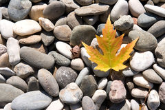 Leaf on the stones Royalty Free Stock Photos