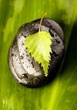 Leaf & Stones Stock Photos