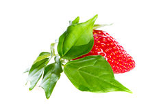 Leaf and strawberry Royalty Free Stock Images