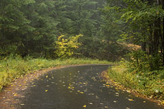 Leaf Strewn Forest Road in Autumn stock photos