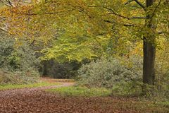 Early autumn path on Southampton Common stock photos