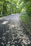 Leaf strewn road Royalty Free Stock Photo