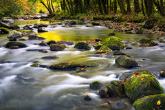 Leaf-strewn Stream in the Smokies Stock Images