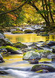 Leaf-strewn Stream in the Smokies Royalty Free Stock Photo