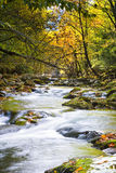 Leaf-strewn Stream in the Smokies Stock Photography