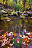 Leaf-strewn stream in the Smokies Royalty Free Stock Images