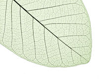 Free Leaf Structure Stock Photos - 16937903