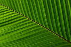 Leaf structure Stock Photo