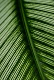 Leaf structure Royalty Free Stock Image