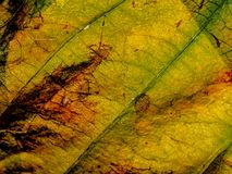 Leaf structure background royalty free stock photography
