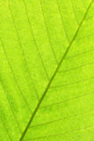 Leaf structure close up background Stock Photo