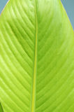 Leaf structure Stock Photography