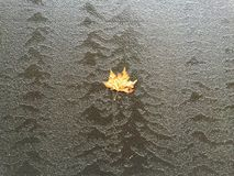 Leaf. Stuck on a wall with flowing water Stock Photography