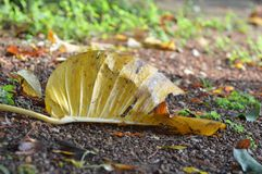 Leaf. In Summer on ground Royalty Free Stock Photos