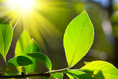 Leaf and sun Royalty Free Stock Photos