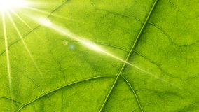 Leaf and sun. Royalty Free Stock Photo