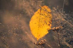 Leaf. On the Sundown in Grass Stock Photo