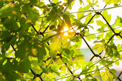 Leaf sunset summer relax background rim light Stock Photos