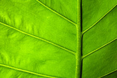 Leaf Surface Stock Image