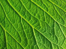 Leaf surface Stock Photo