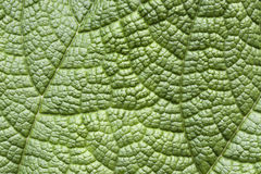 Leaf surface Stock Photography