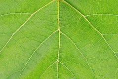 Leaf surface Stock Images