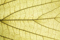Leaf surface Bright Stock Photos