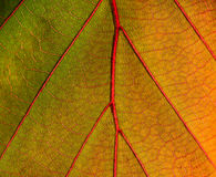 Leaf surface series Royalty Free Stock Image