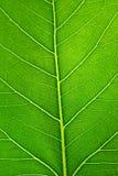 Leaf surface Stock Photos