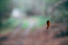 A leaf suspended. In the air hanging on a spider web royalty free stock photo