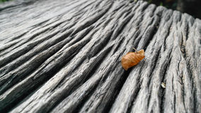 Leaf on Table. A dry leaf remain on the wooden table stock images