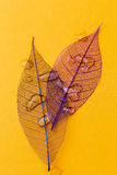 Leaf on the table Royalty Free Stock Images