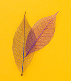 Leaf on the table Royalty Free Stock Image