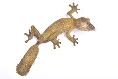 Leaf-tailed gecko, Uroplatus henkeli. The Leaf-tailed gecko, Uroplatus henkeli, is a large, superbe camouflaged lizard species endemic to northern Madagascar Royalty Free Stock Photos