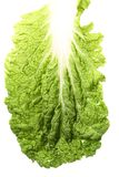 Leaf of Tasty Chinese cabbage Stock Image