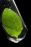 Leaf in test tube Royalty Free Stock Photos