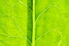Leaf Texture. Details of green leaf texture Royalty Free Stock Photos