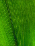 Leaf texture. Close up of a green leaf texture Stock Images