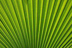 Leaf texture. Green leaf texture as background Royalty Free Stock Photos