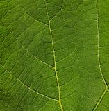 Leaf Texture Royalty Free Stock Photos