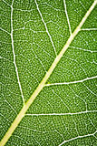 Leaf texture Stock Photo