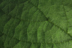 Free Leaf Texture Stock Images - 37070754