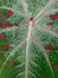 Leaf texture Stock Photo