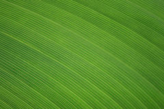 Leaf Texture Stock Images